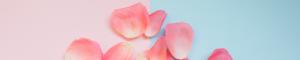 Für mich soll´s rote Rosen regnen @ Walzwerk, Kammeroper Köln